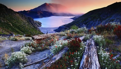 Цветы, травы, бревна, цепкие, горы, туман, утро