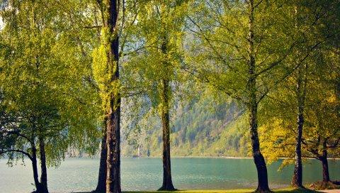 березки, побережье, проспект, озеро, весна, тишина, спокойствие