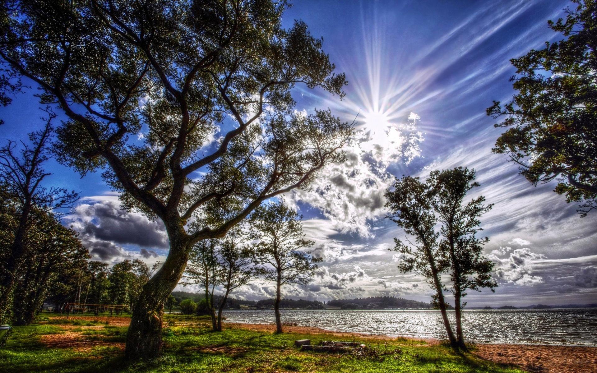 деревья природа цветы река бесплатно