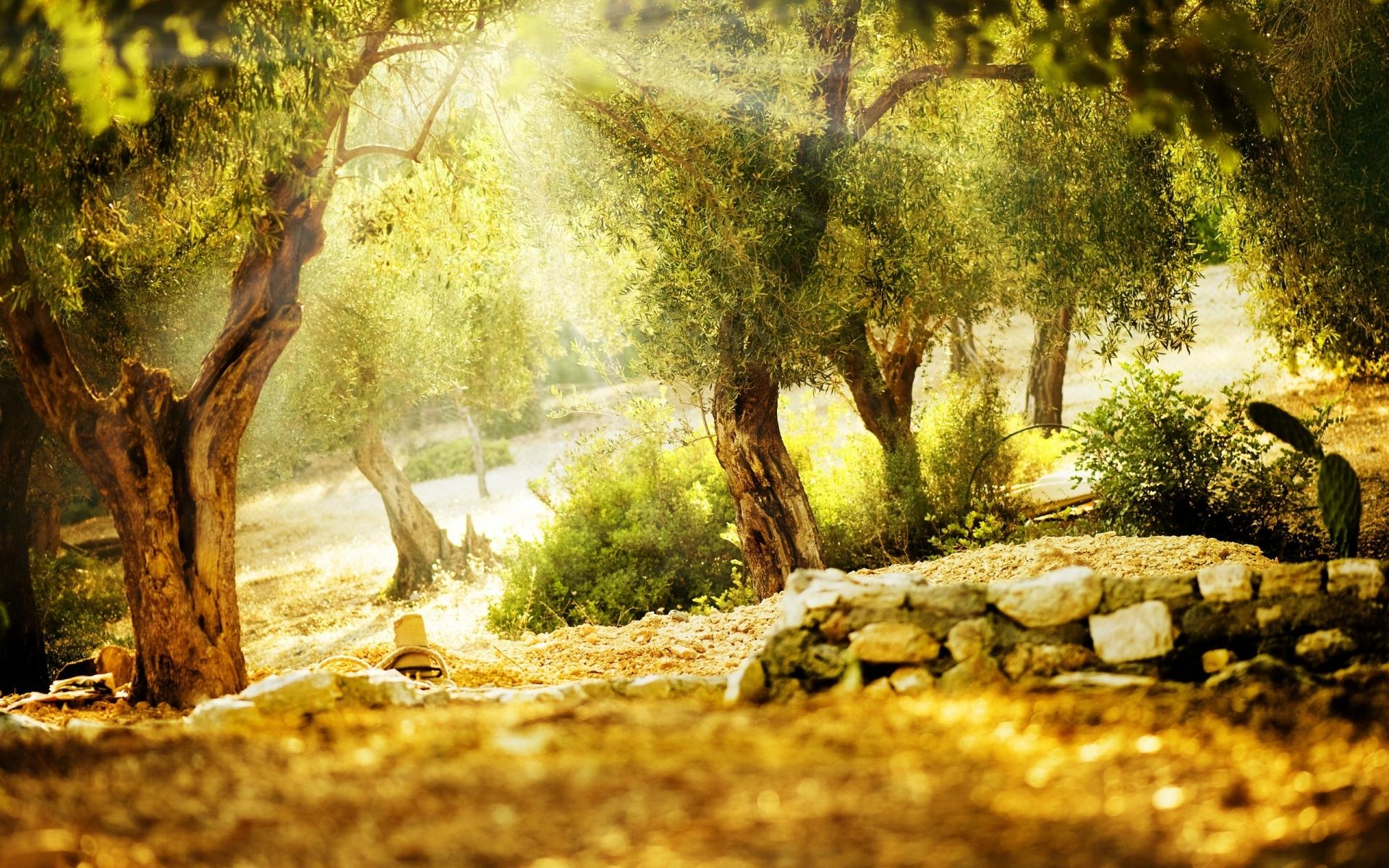 Картинки свет, деревья, камни, балки,вдохновение, нежные фото и обои на рабочий стол