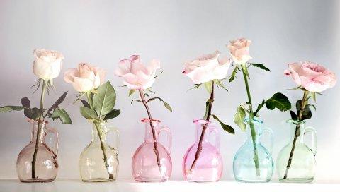 розы, цветы, банки, красочные,номер
