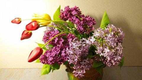 сирень, цветение, тюльпаны, весна