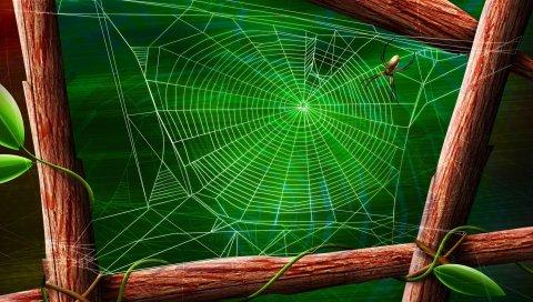 Паутина, листья, дерево, ветки, паук