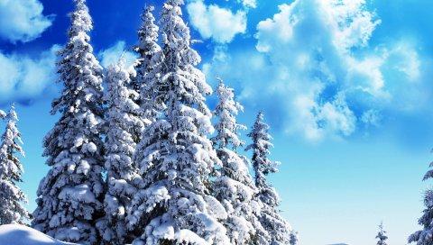 ели, небо, деревья, облака, лазурь, снег, вес,ясно, ярко