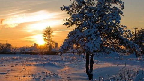 солнце, свет, закат, зима, дерево, снег, кора, блеск