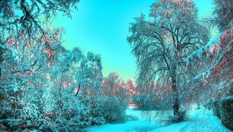 снег, зима, дерева, синий, свет, иная