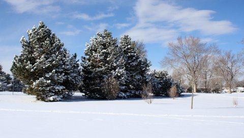 поляна, снег, зима, деревья, небо, синий, сосны, развалившись, ветви, ковровое покрытие, ясно