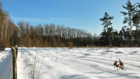 поле, зима, снег, защита, деревья, небо, лазурное,ясно, тени, лезвия