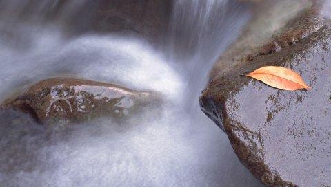 Лист, осень, ручей, вода, камень, мокрый
