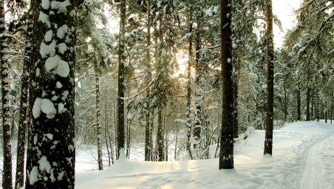 Дерево, деревья, зима, петербург, сестрорецк, дорога, сундуки