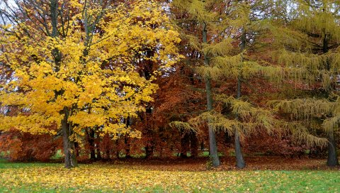 Парк, осень, деревья, листопад, Литва