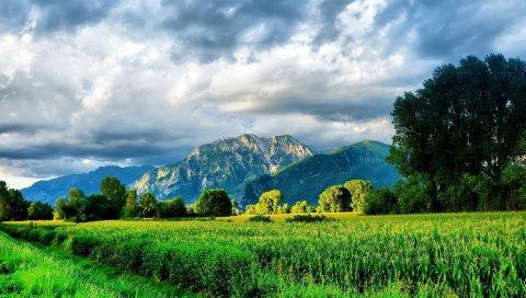 Горы, дорога, полевая кукуруза, ярко, лето, зелень