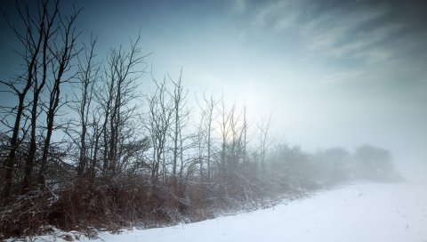 Зима, туман, деревья, тупость, холод, голый