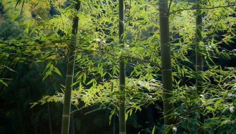 Бамбук, дерево, стебли, спокойствие