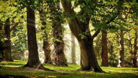 Деревья, солнце, свет, май, лучи, парк