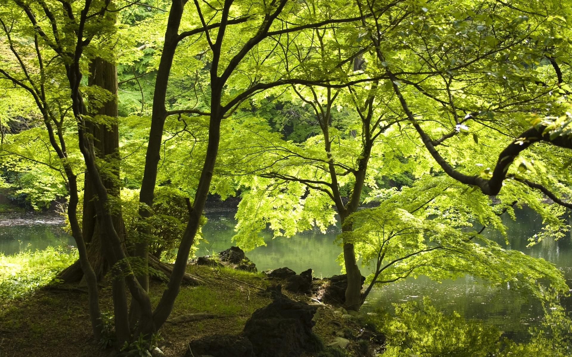 Картинки Деревья, озеро, берег, листва, лето, вода фото и обои на рабочий стол