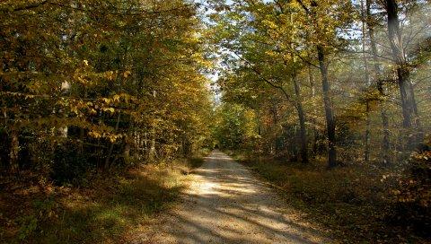 Дорога, земля, дерево, солнце, лучи, осень, сентябрь