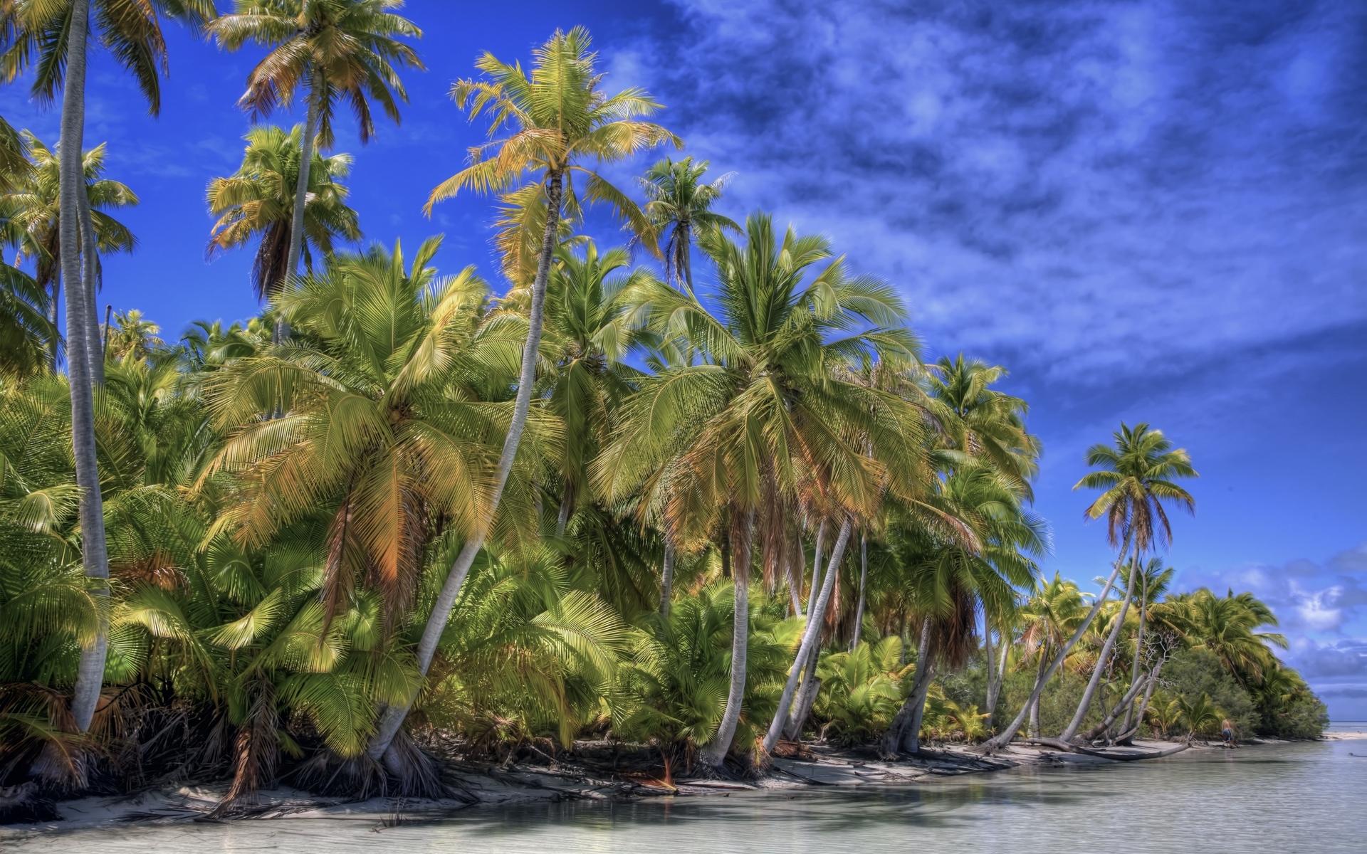Картинки Пальмы, желтый, берег, небо, синий фото и обои на рабочий стол