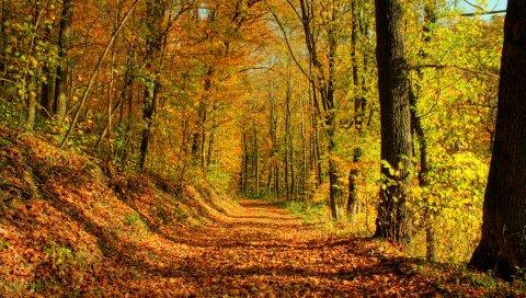 Дерево, дорога, листья, октябрь, золото, полдень, тени