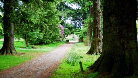 Ветви, дерево, фрагменты, снизу, ствол