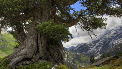 Дерево, колючки, туловище, долговременные, горы, облака, небо, домик, свежесть