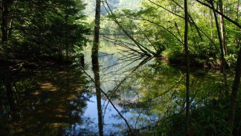 Дерево, озеро, деревья, вода, отражение, тени