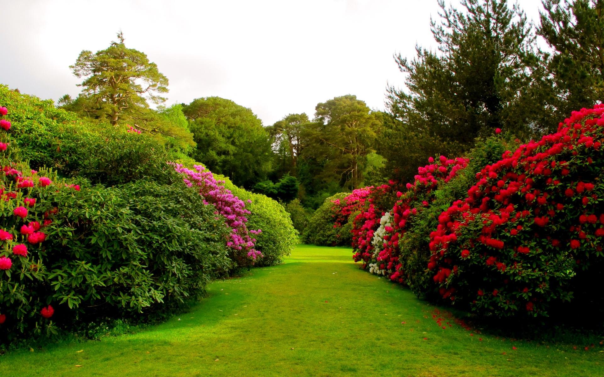 Гиф открытки, картинки красивые цветочные сады