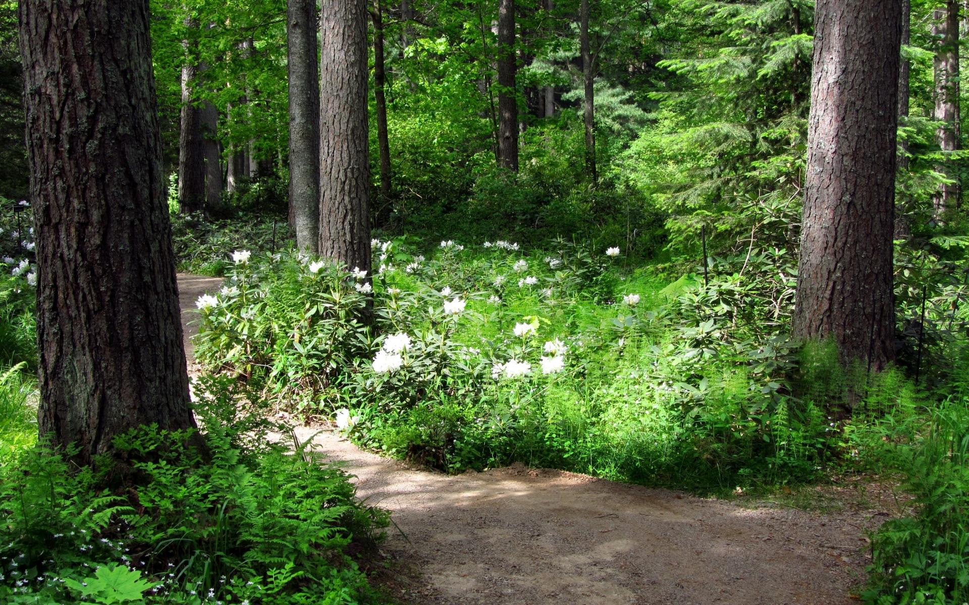 Картинки Деревья, цветы, путь, белый, зеленый фото и обои на рабочий стол