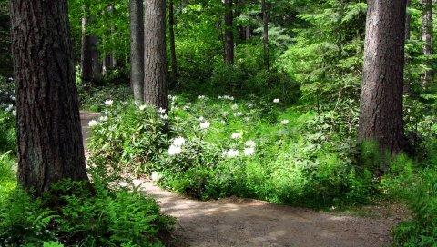 Деревья, цветы, путь, белый, зеленый
