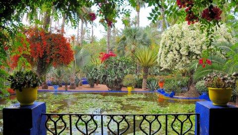Балкон, цветы, горшки, пруд, лилии