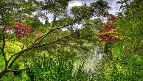 Зеленый, сад, деревья, пруд, лилия, флора