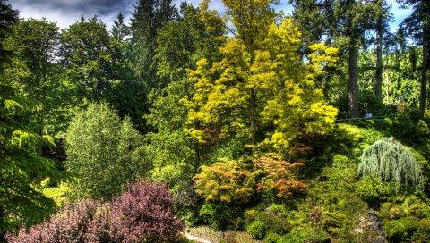 Деревья, кусты, зеленый, ярко