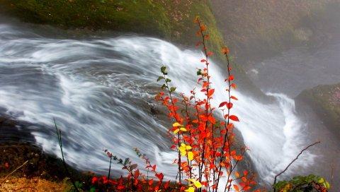 кусты, осень, вода, ручей, река, листья, желтые, оранжевые, прутки