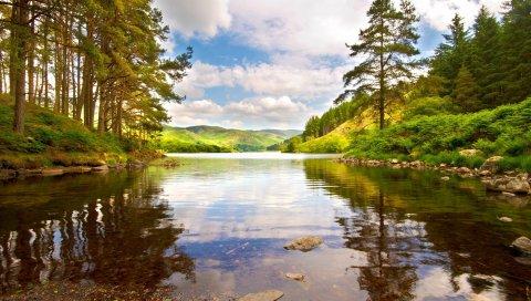озеро, лес, деревья, берег, ярко, лето, полдень, облака, вода, прозрачная