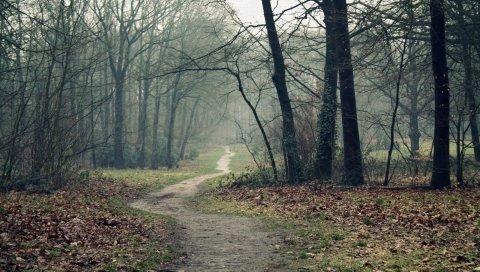 дорожки, дерево, листья, земля, осень, пустота, туман, сырость