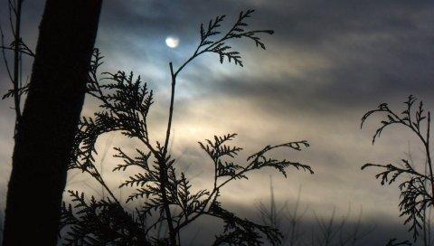 ветки, луна, ночь, дерево, очертание, облако