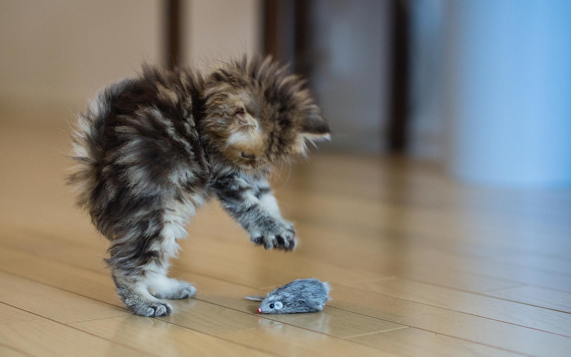 Прикольные фото картинки котят