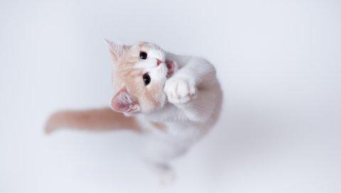 Кошка, игривая, прыгать