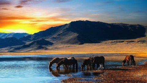 Лошадь, табун, горы, закат, пляж, вода, пить, жажда