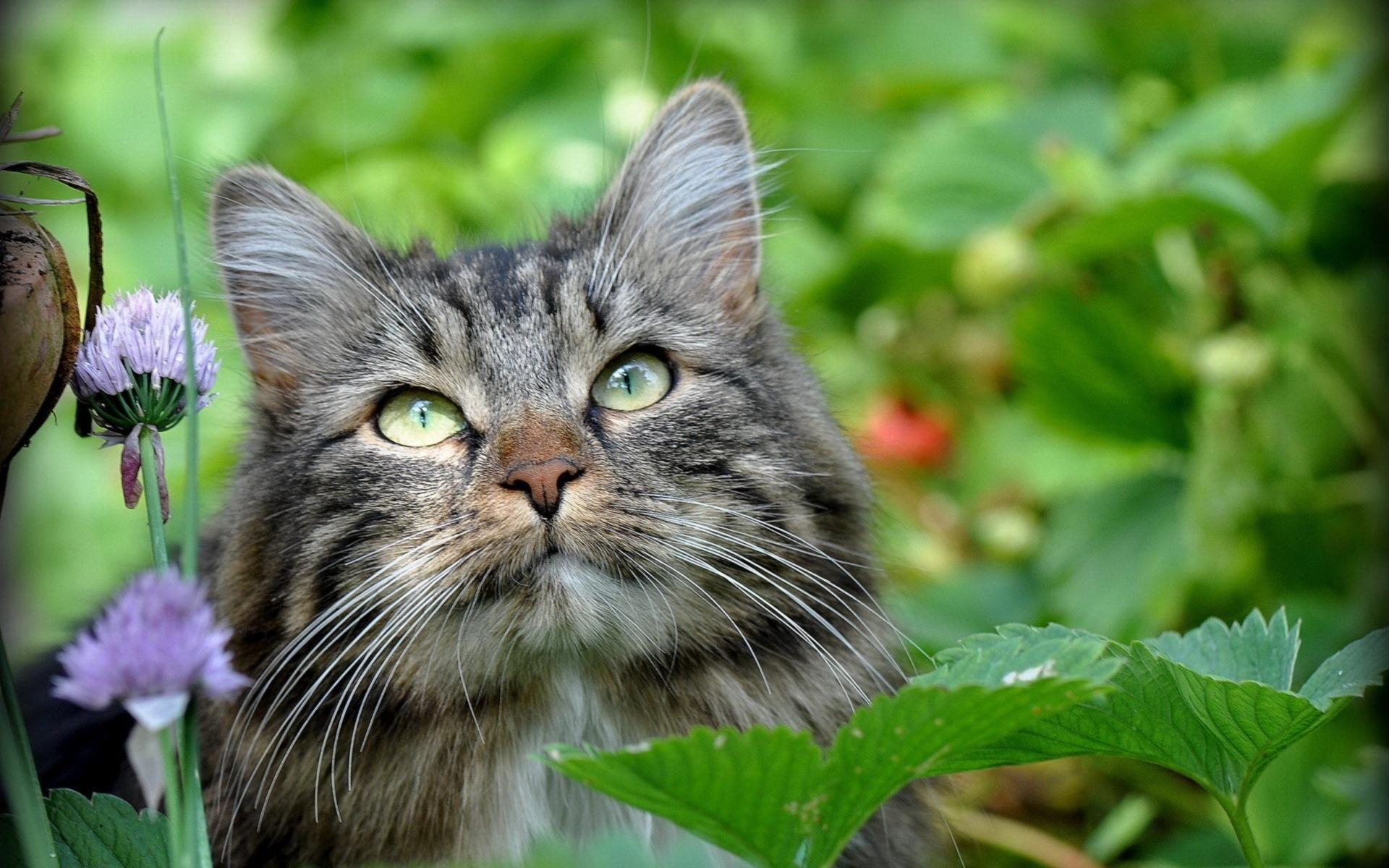 Кошки фото красивые и смешные шубки остались