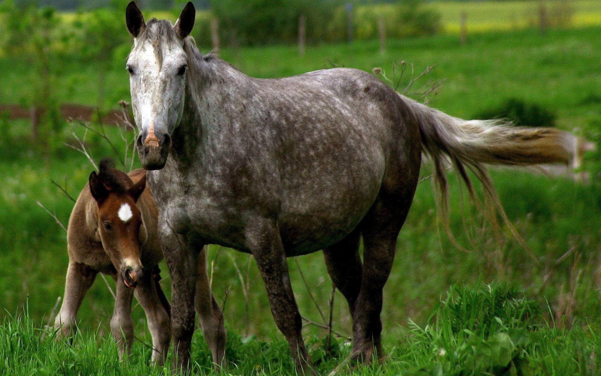 Картинки Лошадь, жеребец, детеныш, пара, уход, трава фото и обои на рабочий стол