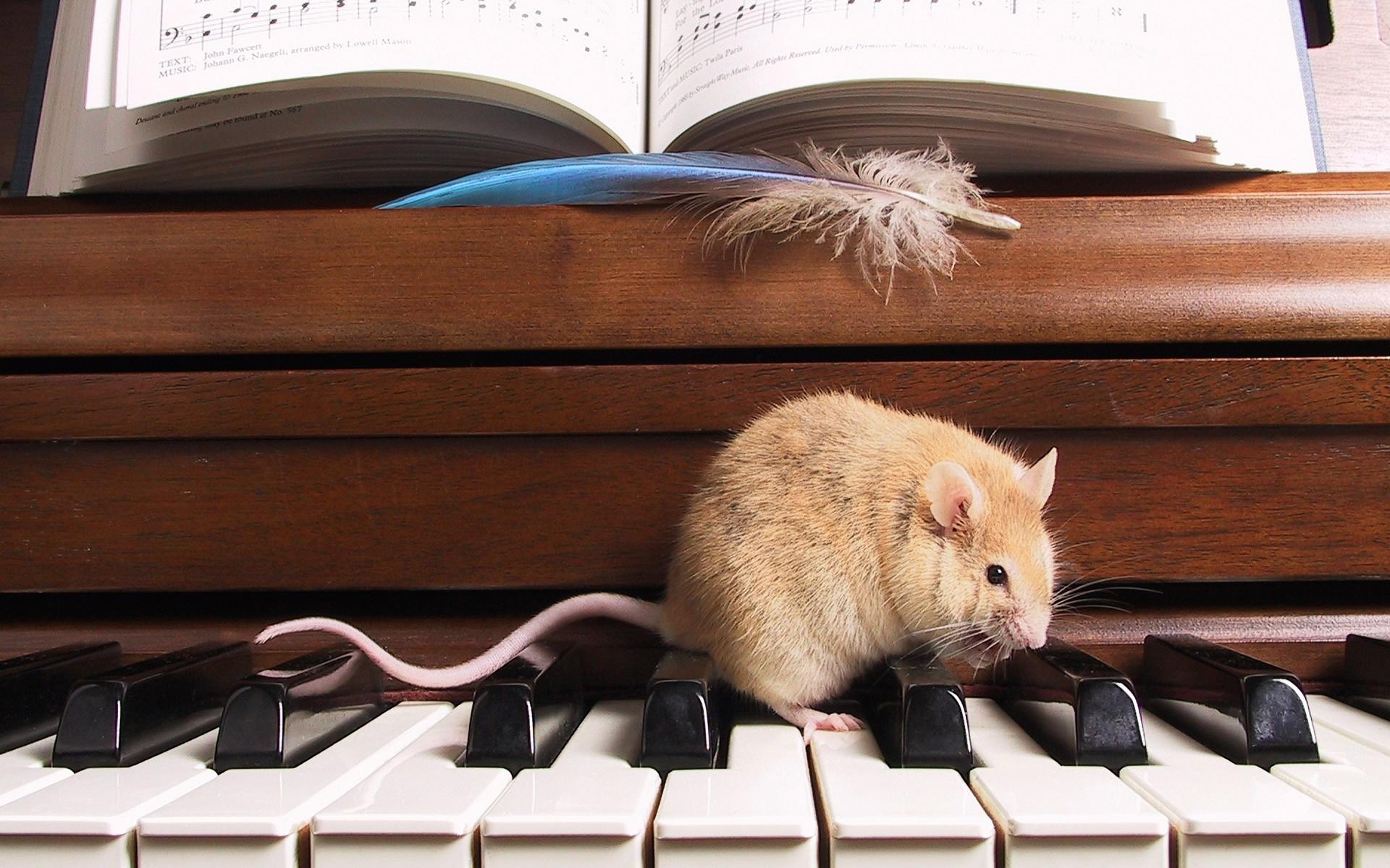 прикольные картинки с крысами на рабочий стол пассажирском салоне