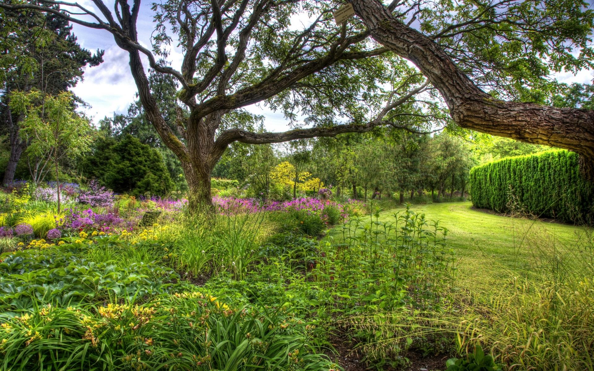 долго готовил картинки фото деревья кустарники предполагает использование опор