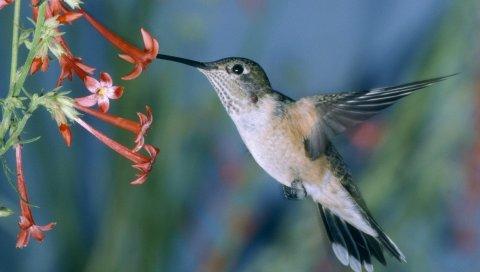 Колибри, качели птицы, цветы