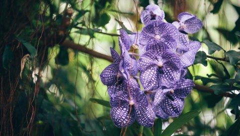 Орхидея, фиолетовый, полосатый, экзотический, резкость