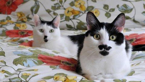 кошки, пара, мило, постельное белье