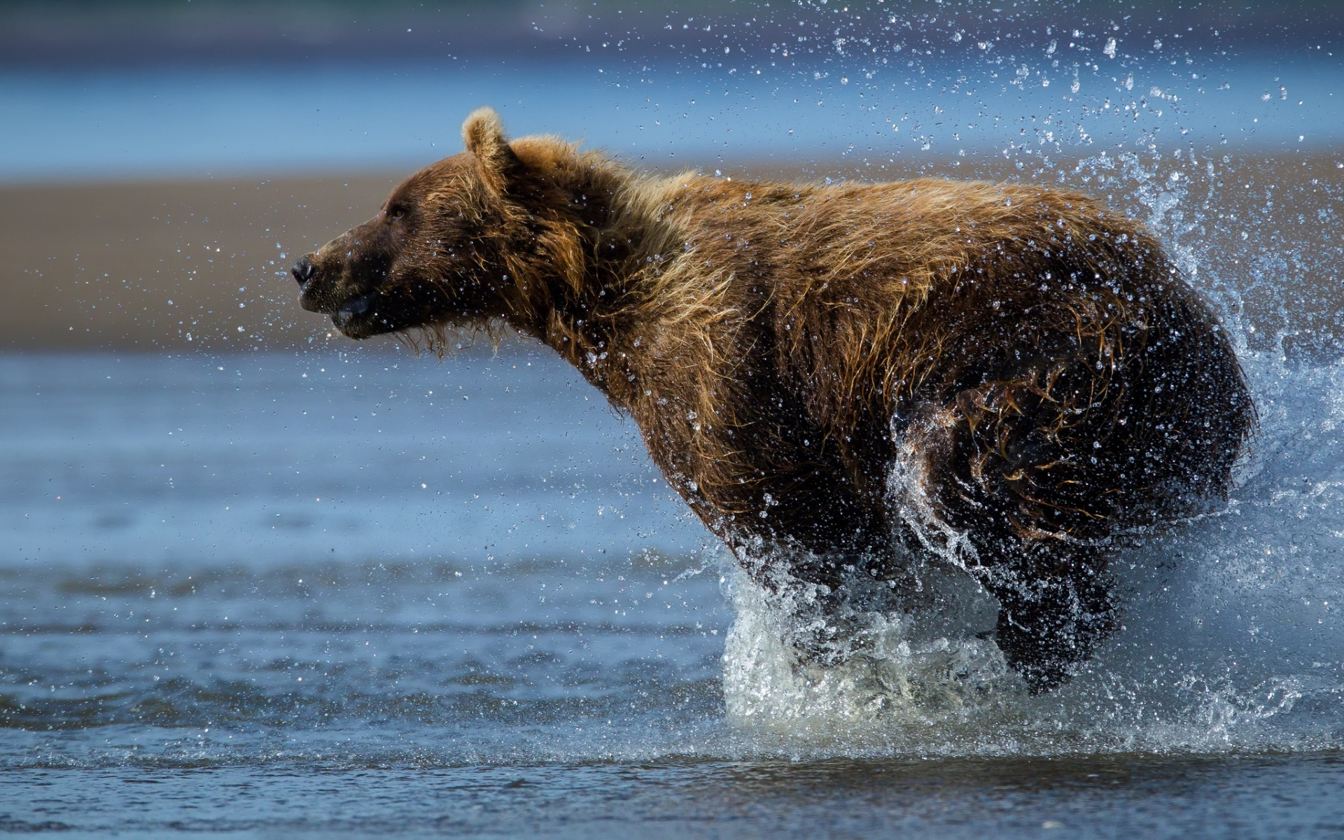того, картинки мокрый медведь крэйг
