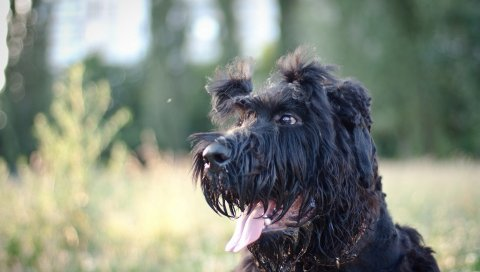 Собака, лицо, мокрый
