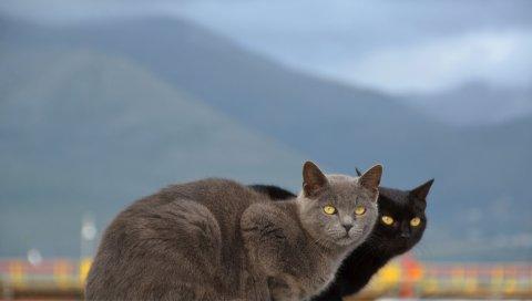 Кошки, пара, горы, размытие