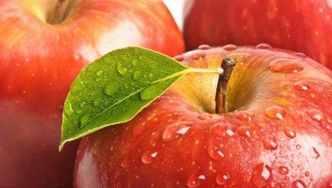 Яблоко, фрукты, капля, веточка